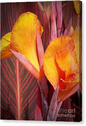 Up Close And Personal Canvas Print by Chalet Roome-Rigdon