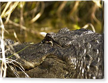 Up Close And Personal Canvas Print by Frank Feliciano