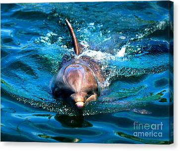 Canvas Print featuring the photograph Up Close And Personal by Kristine Merc