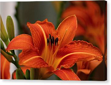 Up Close And Personal Two Canvas Print by Jeanette C Landstrom