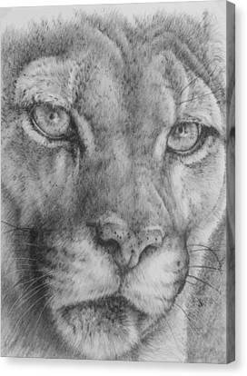 Feline Canvas Print - Up Close Cougar by Barbara Keith
