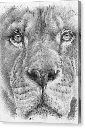 Up Close Lion Canvas Print by Barbara Keith