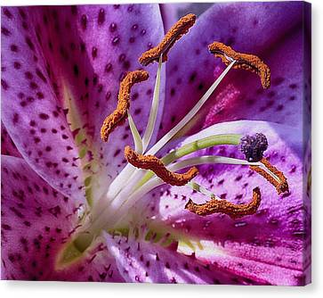 Up Close Canvas Print
