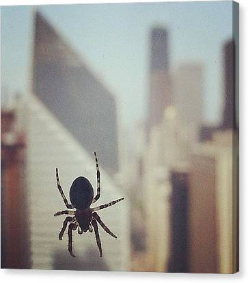 Up Here With The Spiders Canvas Print by Jill Tuinier