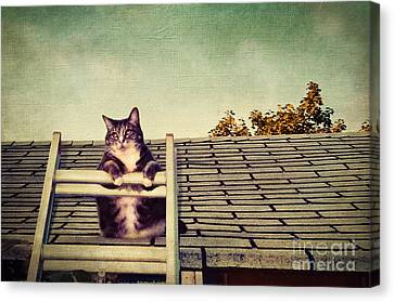 Cat Up On The Roof Canvas Print by Colleen Kammerer