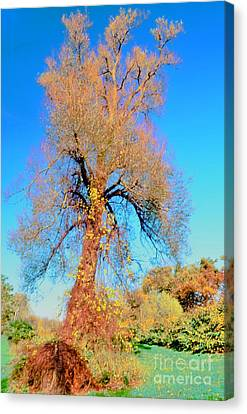 Up Rooted Tree Canvas Print by Kathleen Struckle
