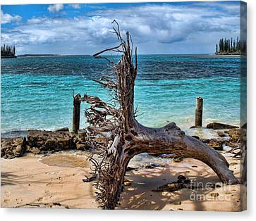 Canvas Print featuring the photograph Up Rooted by Trena Mara
