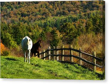 Canvas Print featuring the photograph Up The Hill by Joan Davis
