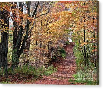 Up The Wooded Lane Canvas Print