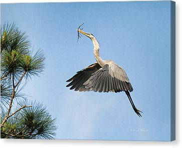 Up To The Nest Canvas Print by Deborah Benoit