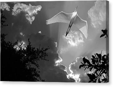 Up Up And Away Bw Canvas Print