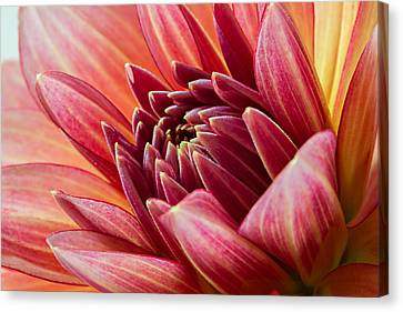 Uplifting 2 Canvas Print by Mary Jo Allen