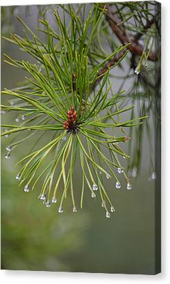 Upon A Winter's Rain Canvas Print