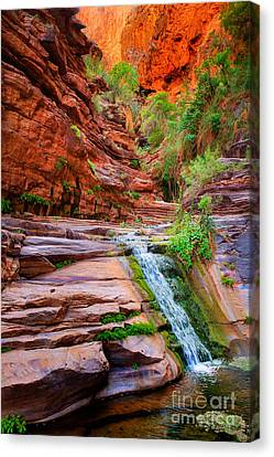 Grand Canyon National Park Canvas Print - Upper Elves Chasm Cascade by Inge Johnsson