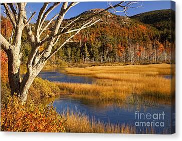 Maine Mountains Canvas Print - Upper Hadlock Pond by Brian Jannsen