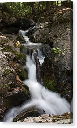 Upper Pup Creek Falls Canvas Print