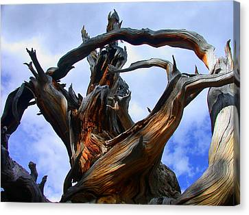 Uprooted Beauty Canvas Print by Shane Bechler