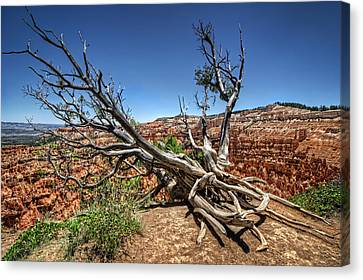 Canvas Print featuring the photograph Uprooted - Bryce Canyon by Tammy Wetzel