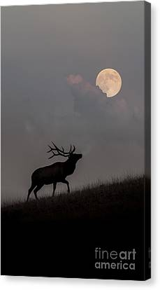 Upwardly Mobile - Yellowstone National Park Canvas Print by Sandra Bronstein