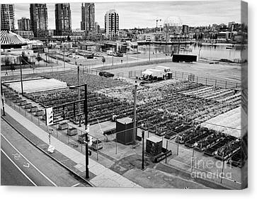 urban farm on unused lot at concord pacific place at false creek Vancouver BC Canada Canvas Print by Joe Fox