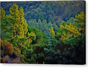 Canvas Print featuring the photograph Urban Forrest by Joseph Hollingsworth