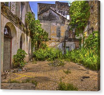 Canvas Print featuring the photograph Urban Jungle by Kandy Hurley