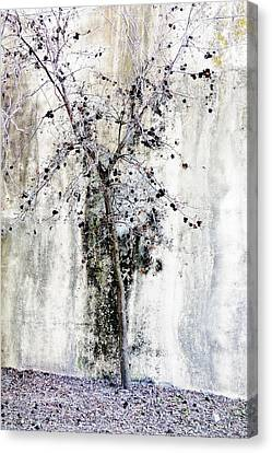 Urban Oak Tree Canvas Print by Pamela Patch