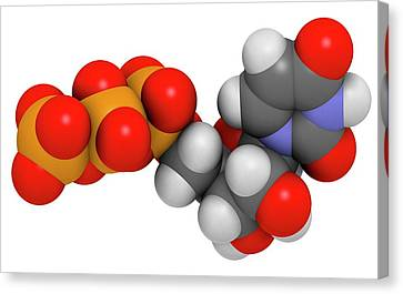 Uridine Triphosphate Nucleotide Molecule Canvas Print by Molekuul