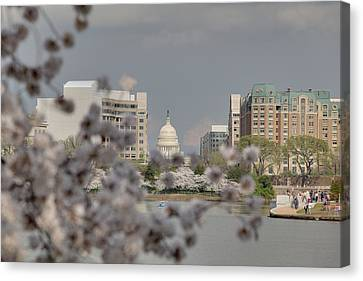 Us Capitol - Cherry Blossoms - Washington Dc - 01138 Canvas Print by DC Photographer