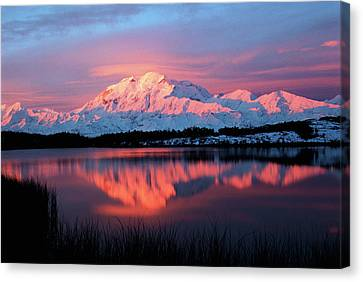 Alaska Canvas Print - Usa, Alaska, Denali National Park by Hugh Rose