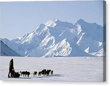 Usa, Alaska, Sled Dogs, Park Ranger Canvas Print by Gerry Reynolds