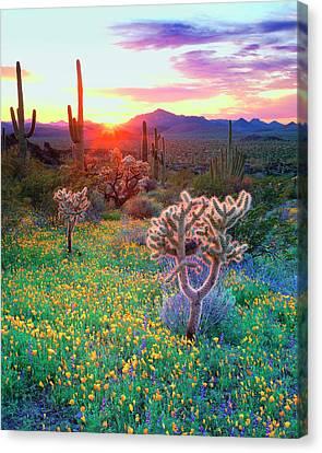 Usa, Arizona, Wildflowers And Cacti Canvas Print by Jaynes Gallery