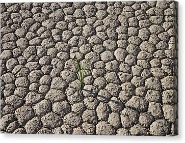 Usa, California, Death Valley, Grass On Canvas Print