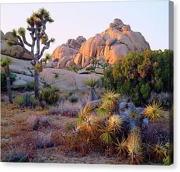 Usa, California, Joshua Tree National Canvas Print