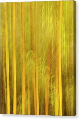 Usa, California, San Diego, Bamboo Canvas Print