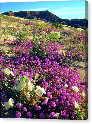 Usa, California, Sand Verbena And Dune Canvas Print by Jaynes Gallery