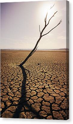 Usa, California, Tree Snag And Cracked Canvas Print by Larry Dale Gordon