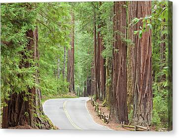 Usa, California View Of Road Canvas Print
