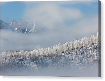 Usa, Colorado Hoarfrost Coats The Trees Canvas Print by Jaynes Gallery