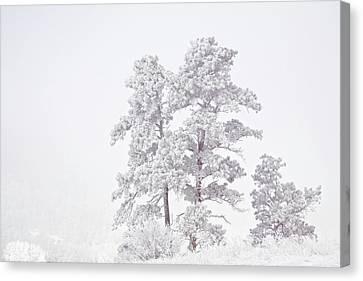Usa, Colorado, Ute Pass Canvas Print by Jaynes Gallery