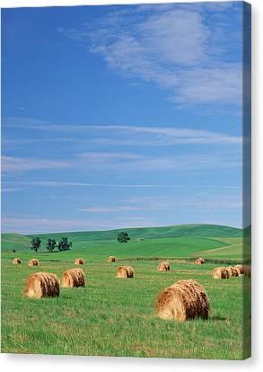 Bale Canvas Print - Usa, Eastern Washington, Hay Bales by Adam Jones
