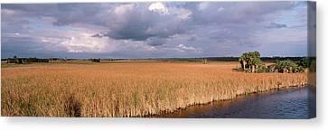National Preserves Canvas Print - Usa, Florida, Big Cypress National by Panoramic Images