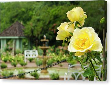 Usa, Florida Harry P Leu Gardens Canvas Print by Michael Defreitas