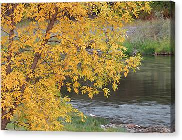Usa, Idaho, Salmon River, Fall Canvas Print by Gerry Reynolds