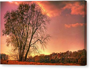 Usa, Indiana Giant Tree In Prophetstown Canvas Print