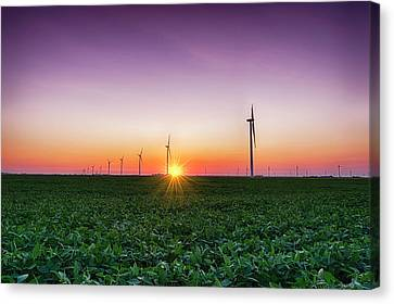 Usa, Indiana Soybean Field And Wind Canvas Print
