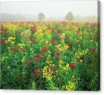 Usa, Kentucky, Late Summer Field Canvas Print by Adam Jones