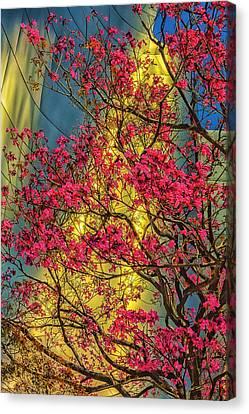 Usa, Los Angeles, Ca, The Disney Center Canvas Print by Rona Schwarz
