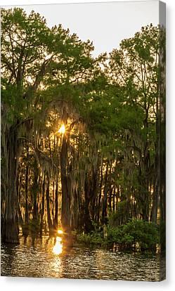 Usa, Louisiana, Atchafalaya Basin Canvas Print