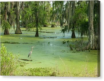 Usa, Louisiana, Atchafalaya Basin, Lake Canvas Print